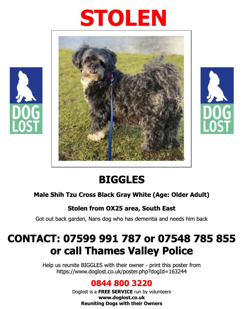 Biggles - lost or stolen